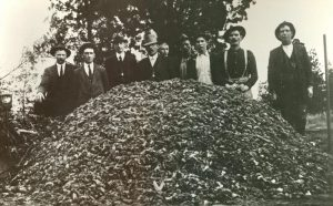 Pile of mice from 1917