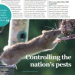 Over the Counter article rat image